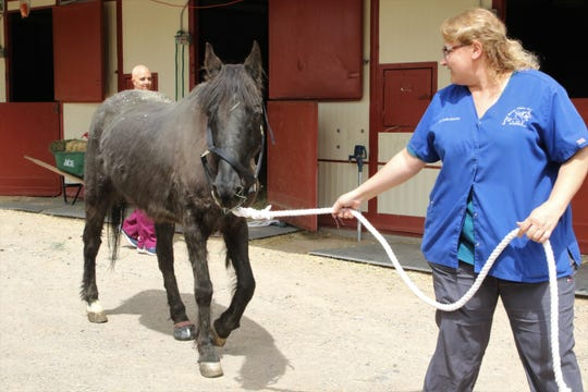Dr. Jennifer Bracken leads Dulce from her stall Monday at Animal Haven in Farmington.