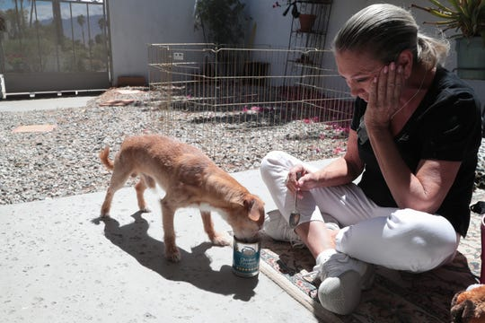 Katie Phillips laughs while trying to spoon feed Scotty, one of the dogs that was seized from Deborah Sue Culwell's home by Riverside County Animal Services, Palm Springs, Calif., May 6, 2019.  Phillips is a volunteer for Society's Outkasts Animal Rescue, a Palm Desert-based nonprofit, and is currently fostering two dogs.