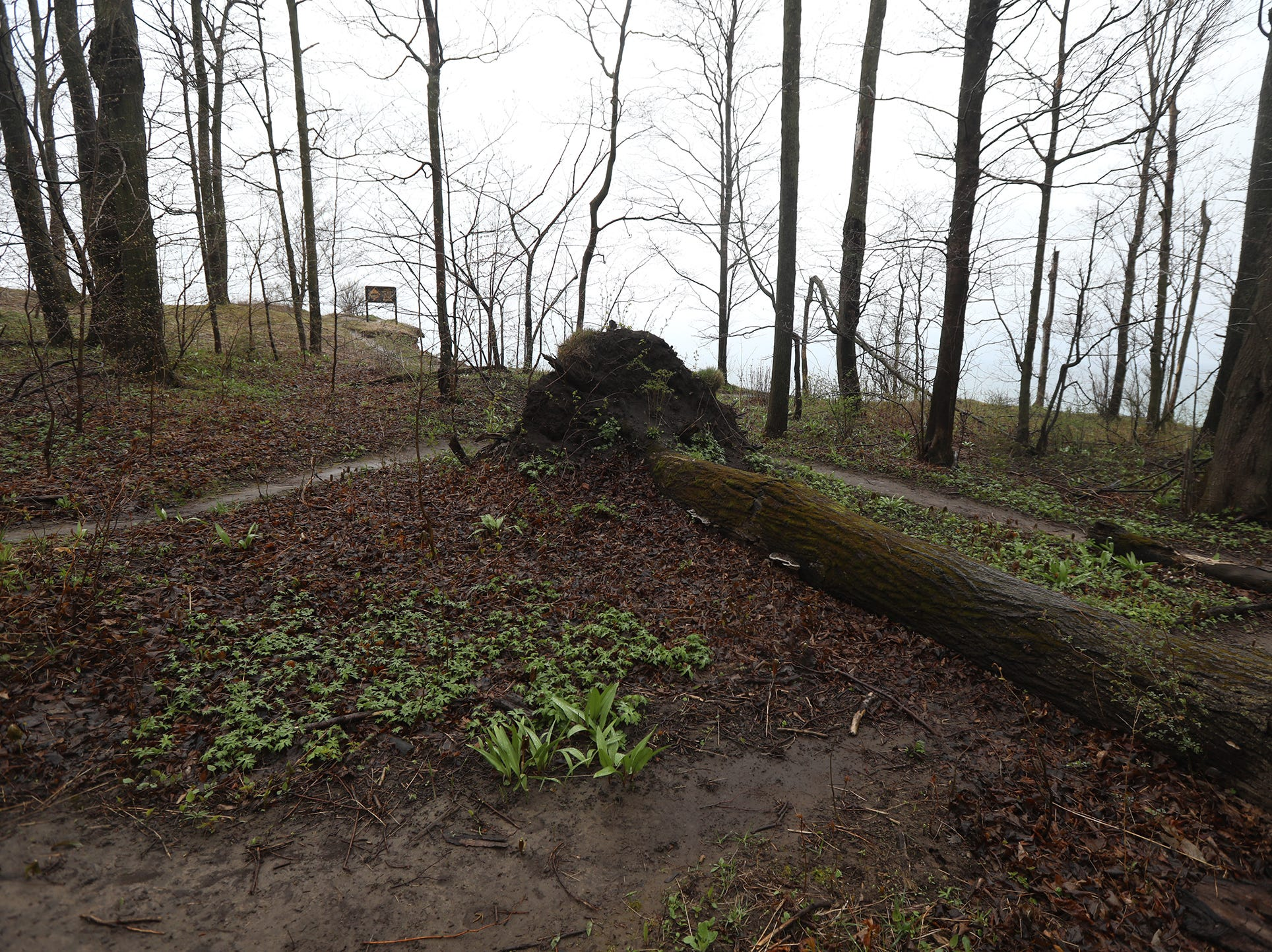 Downed trees cross some of the hiking paths.