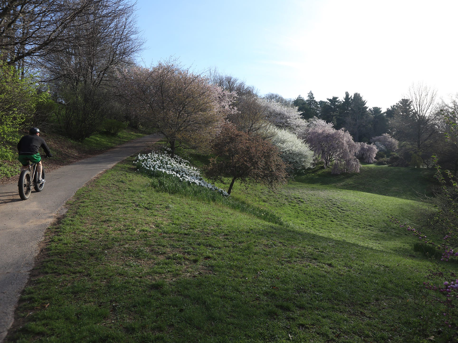 Highland Park has a variety of trees, shrubs and flowers throughout the park.