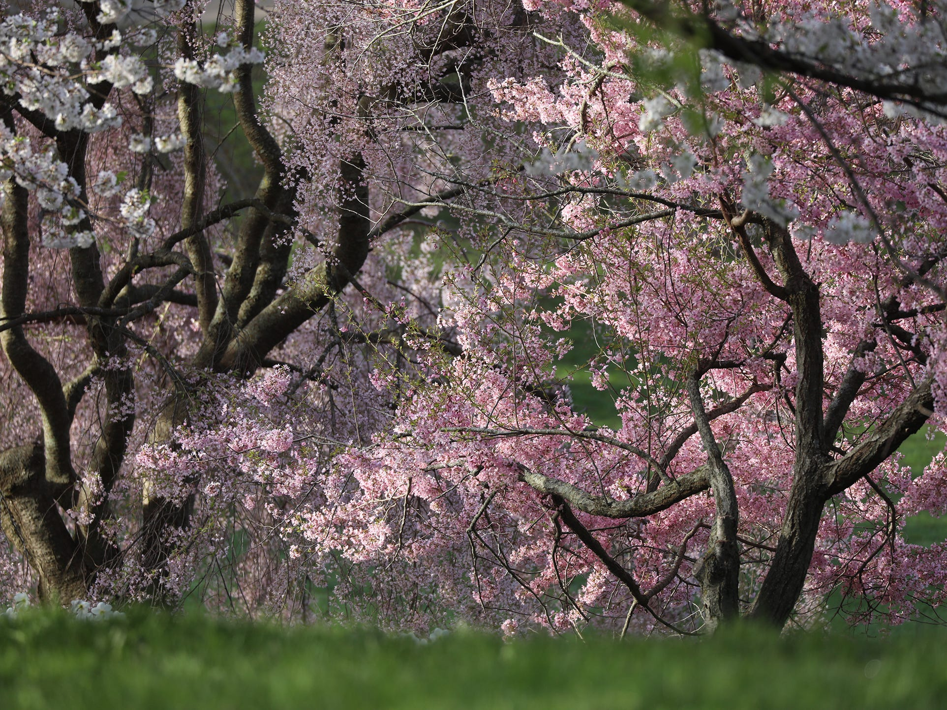 Some trees have already bloomed with their flowers.