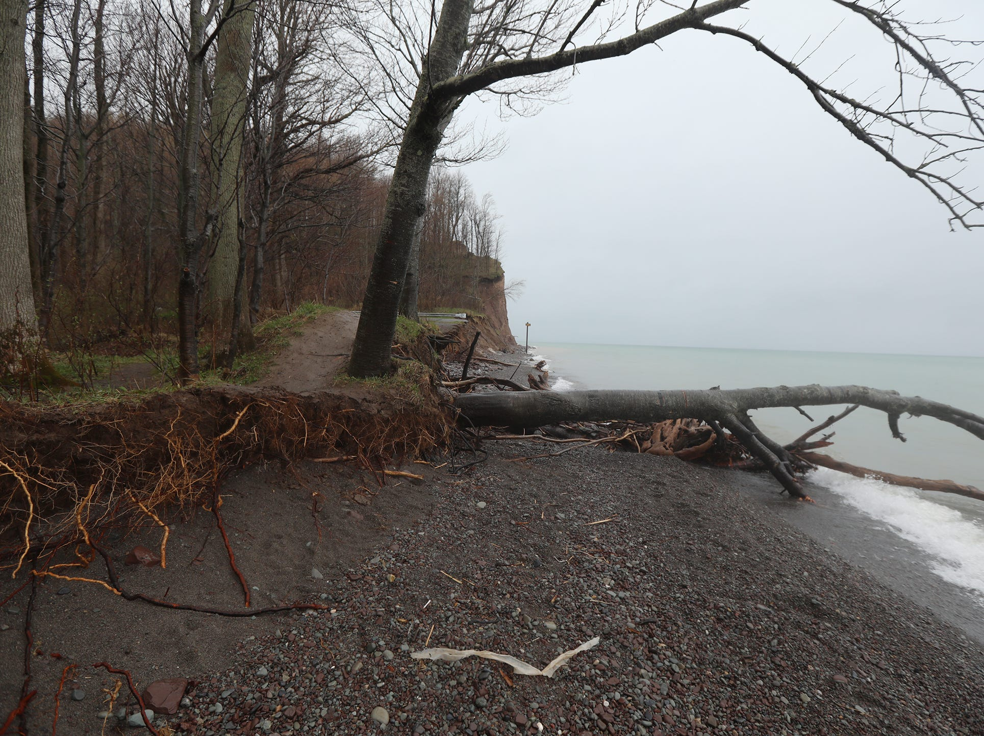 The lower trail along Lake Ontario has eroded in places uprooting trees.
