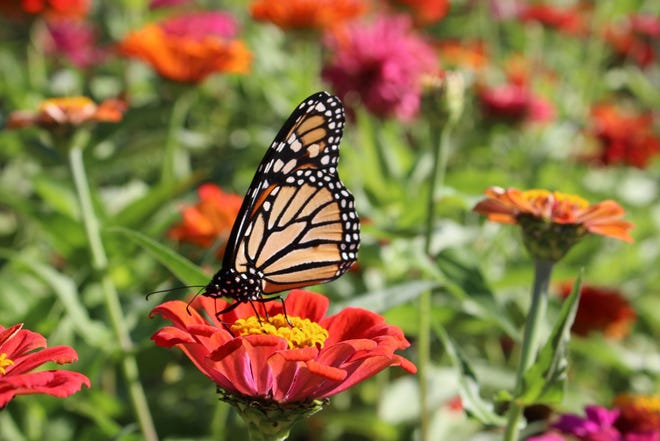 CU Maurice River announces the opening of the Neighborhood Wildlife Garden on May 11. The event will feature free, fun, family activities.