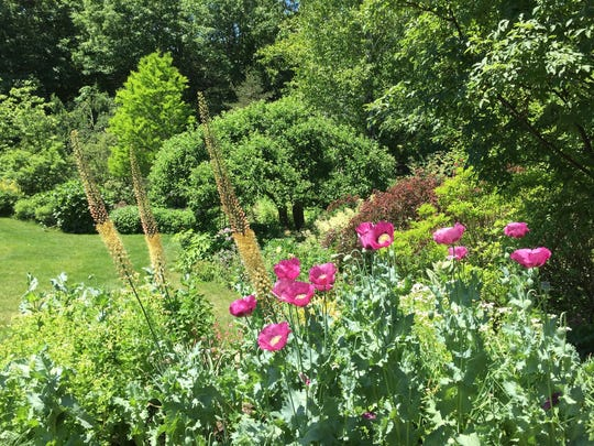 Like many exuberant gardeners, Ellen Petersen says that her Dutchess County garden gets bigger every year.
