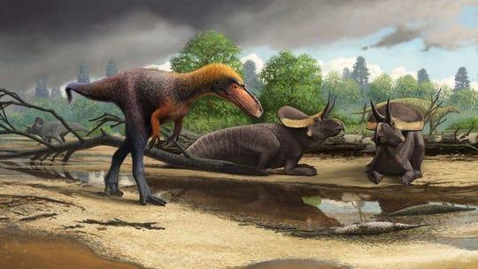 Suskityrannus hazelae may have looked like this.