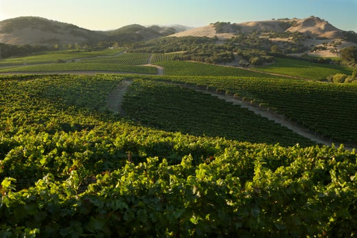 California wine country: How to visit Napa and Sonoma in one day