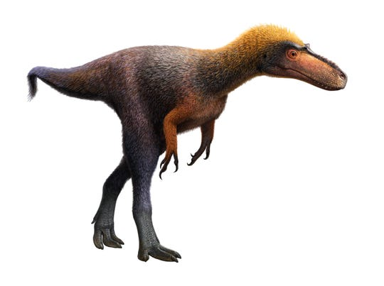 The newly named tyrannosauroid dinosaur – Suskityrannus hazelae – stood roughly 3 feet tall at the hip and was about 9 feet in length.