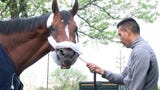 Maximum Security, disqualified after winning the Kentucky Derby on Saturday, arrives at Monmouth Park in Oceanport, New Jersey