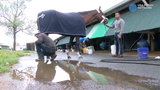 Maximum Security, disqualified after winning the Kentucky Derby on Saturday, arrives at Monmouth Park in Oceanport, NJ.