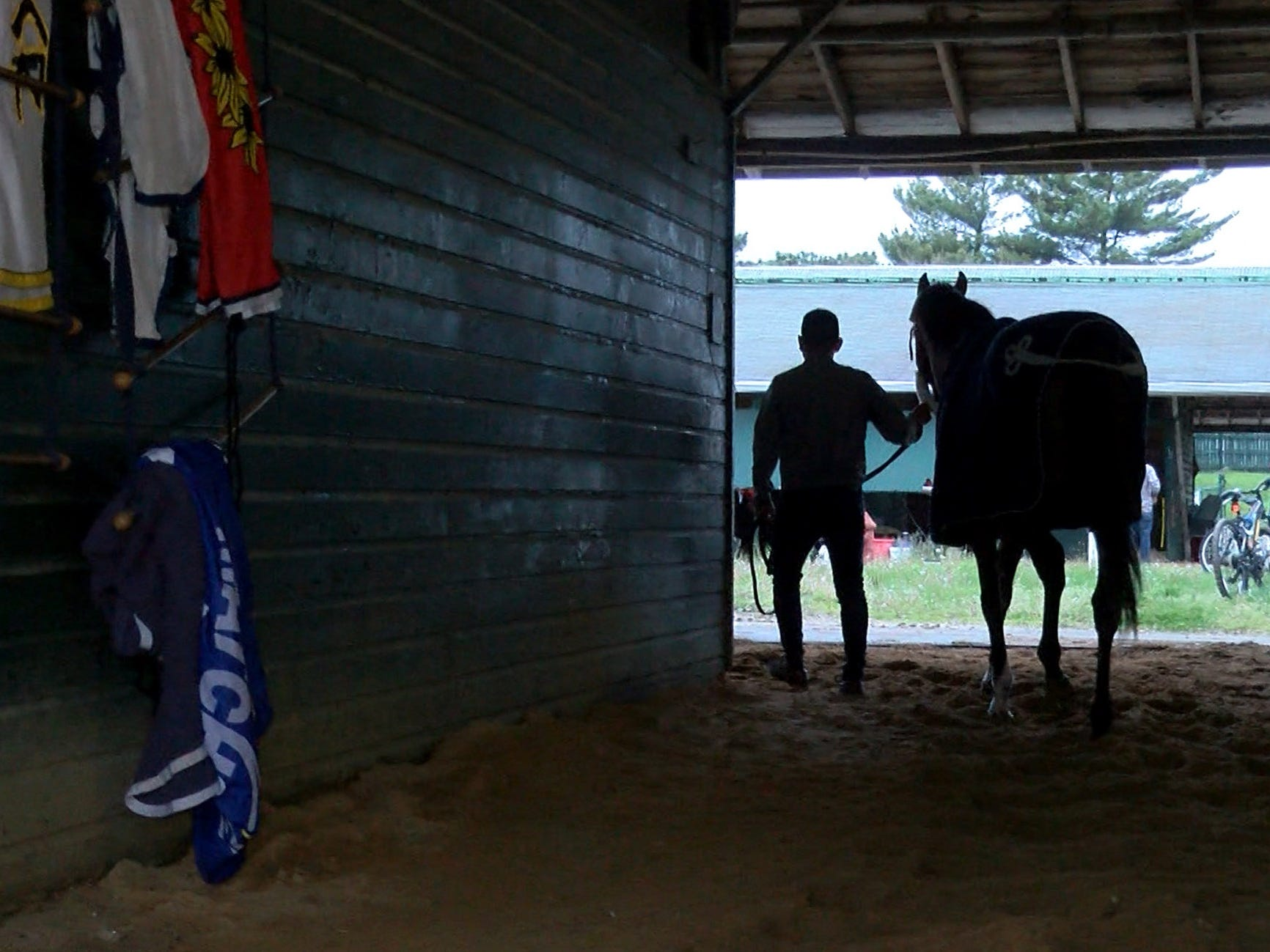 Edelberto Rivas leads Maximum Security, disqualified after winning the Kentucky Derby on Saturday, around Jason Servis' barn after arriving at Monmouth Park early Tuesday, May 7, 2019.