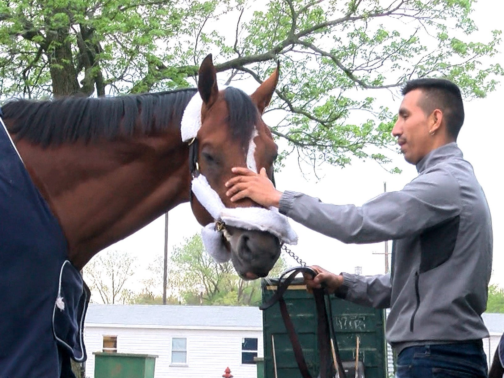 Edelberto Rivas pets Maximum Security, disqualified after winning the Kentucky Derby on Saturday, after arriving at Monmouth Park early Tuesday, May 7, 2019.