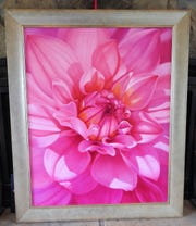 """Hello Dolly"" is oil painting of a pink dahlia by Melissa Maxwell of Warsaw. The painting was recently selected for the American Women Artists 2019 spring online juried show."