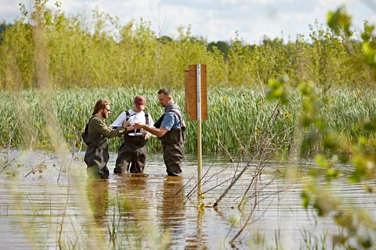 Franklin College associate professor Ben O'Neal (right) works with students Clay Tressler (middle) and William Gibson to conduct a wetland survey. O'Neal is one of the lead investigators on a new study that aims to understand and improve Canada goose management techniques in Indiana.