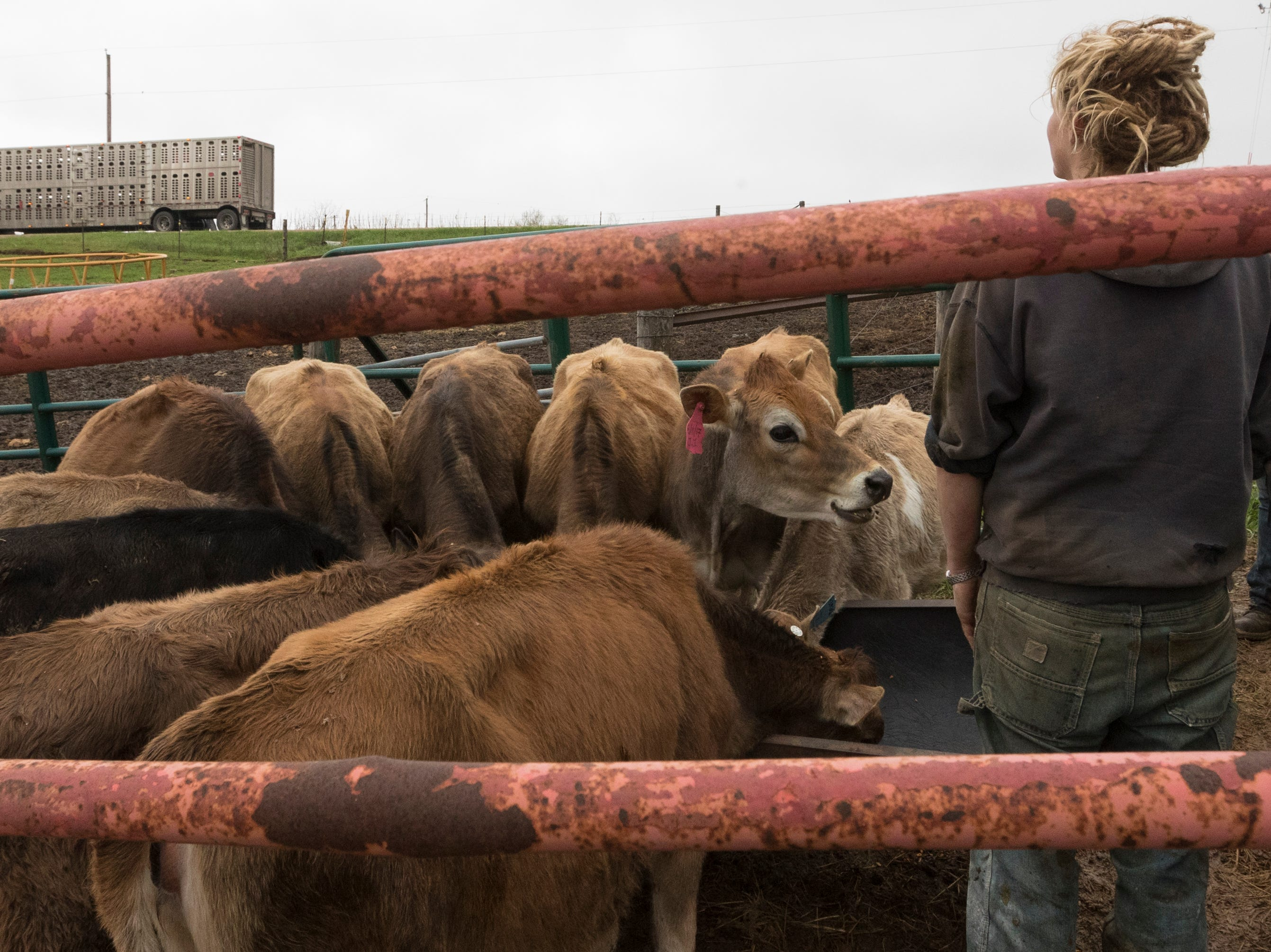 Emily Harris takes a final look as a truck departs with most of her herd.