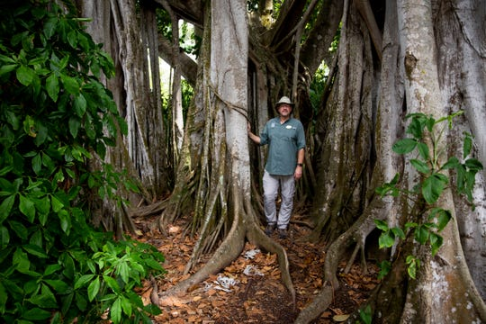 Naples Zoo conservation director Tim Tetzlaff, son of the zoo's founders, poses for a portrait at the base of a Ficus altissima, or lofty fig, at Naples Zoo at Caribbean Gardens in Naples on Monday, May 6, 2019. The tree was planted sometime between 1919 and 1929 when the garden was owned by conservationist Dr. Henry Nehrling. This year the Naples Zoo is celebrating 100 years as a botanical garden and 50 years as a zoo.
