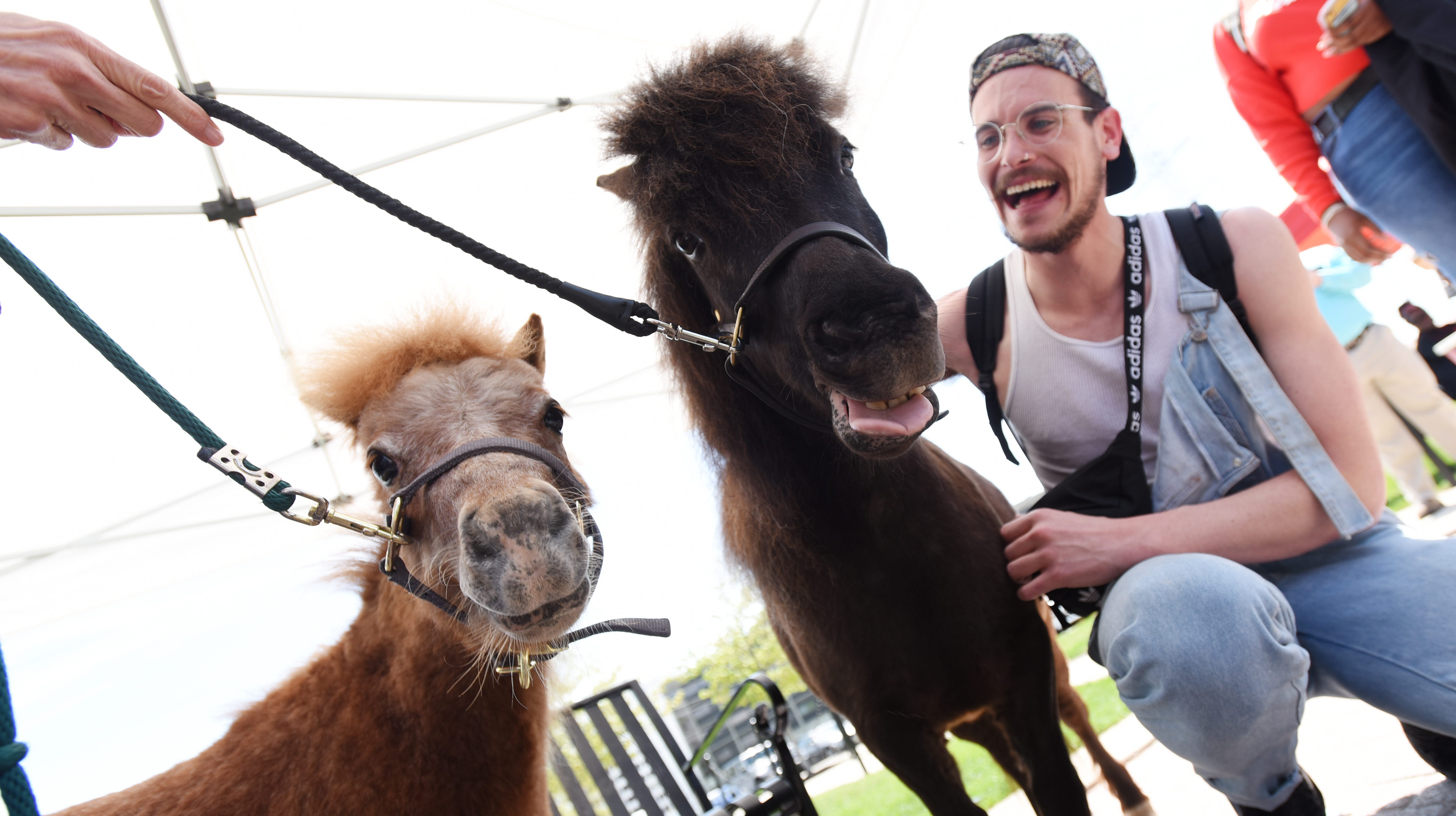 Mini horses come to Montclair State for finals week to help de-stress students