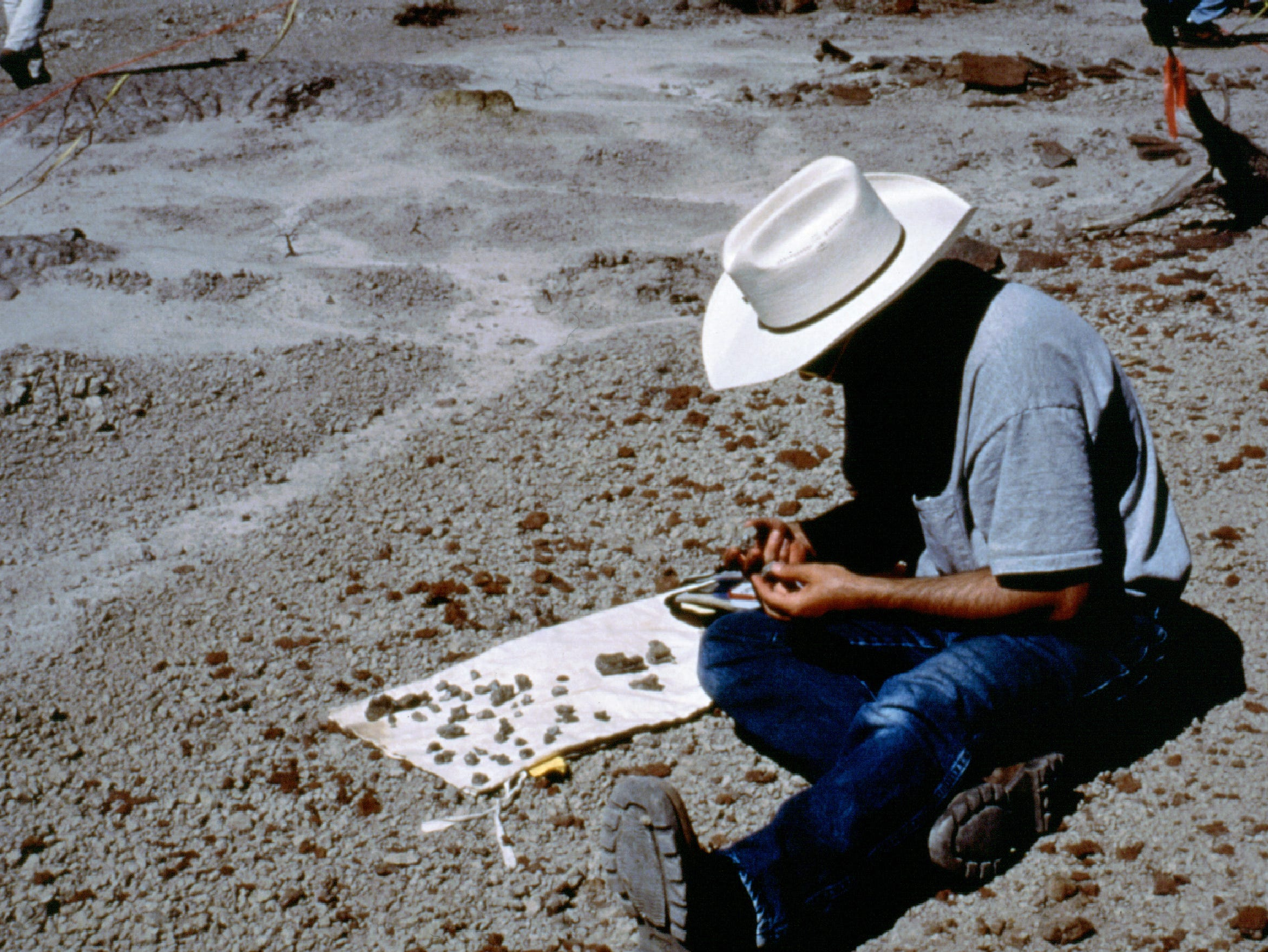An expert studies the bones that would later be identified as the Suskityrannus.