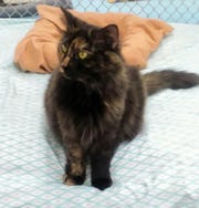 Mia is available for adoption at 10807 N. 96th Ave. in Peoria. For more information, call 623-773-2246 after 10 a.m.
