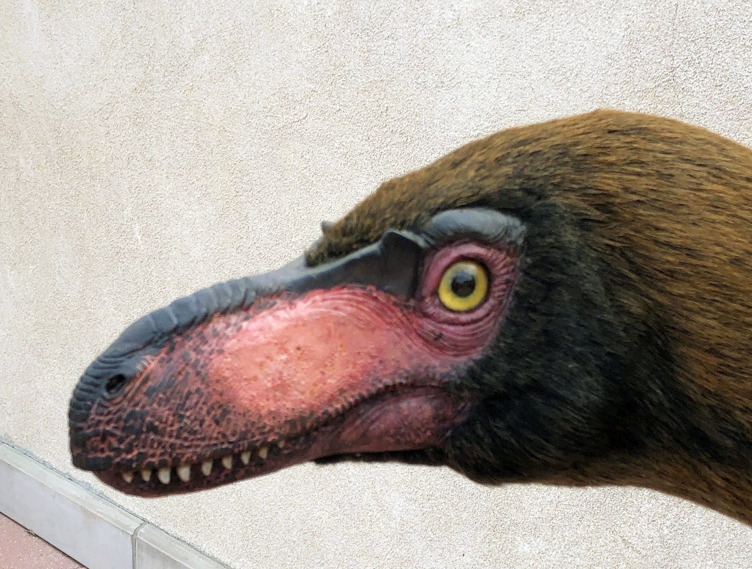 The Suskityrannus, a cousin of the T. rex, stood only 3 feet tall. Bones were first discovered by a Mesa native in 1998, but scientists for years weren't able to positively ID them.