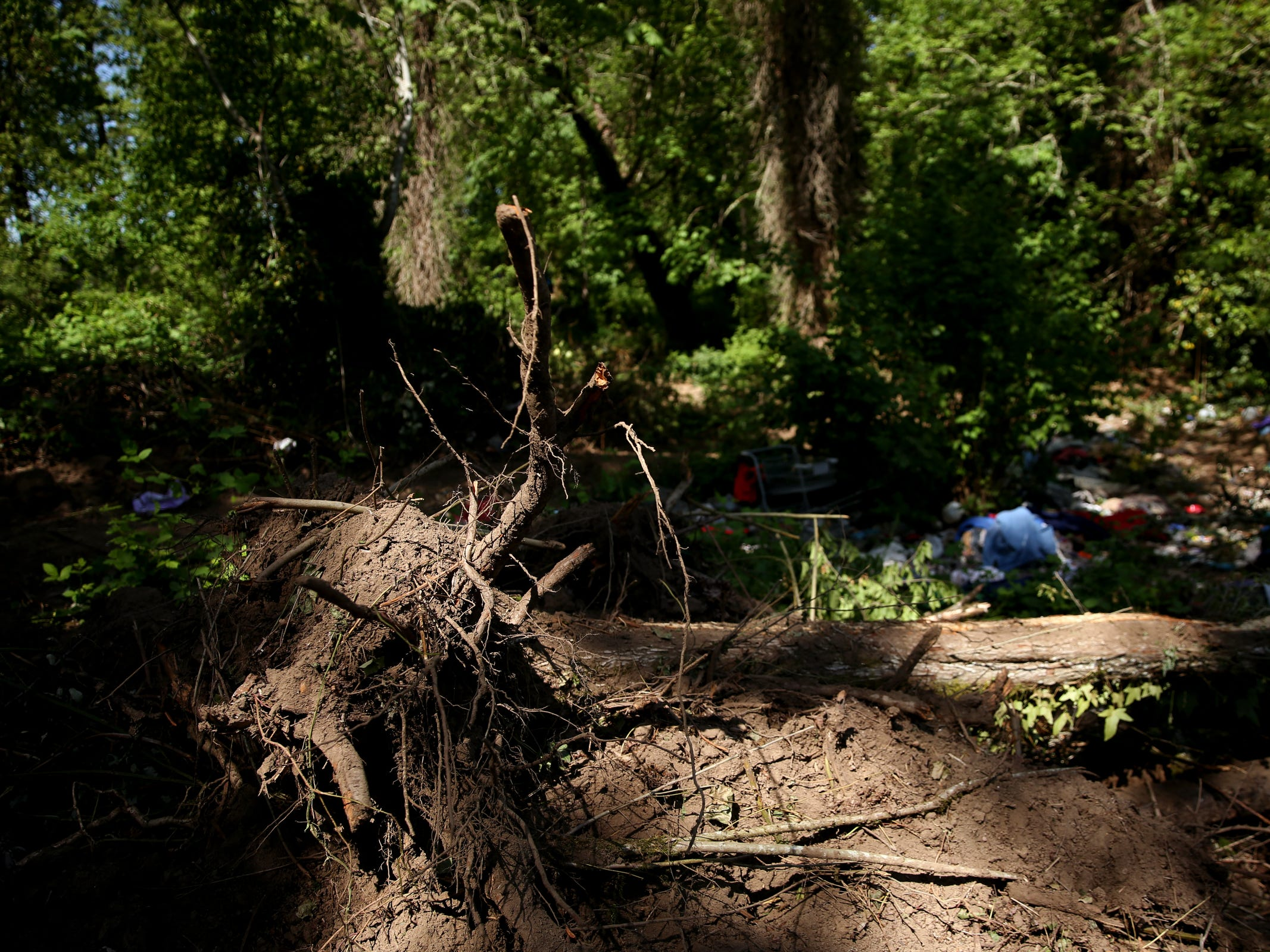 Bulldozer tracks and knocked over trees in a homeless camp near Wallace Marine Park in West Salem on May 6, 2019. Signs were posted throughout the camp recently stating personal property must be removed or it will be taken by the landowner and its designated agent starting May 7.