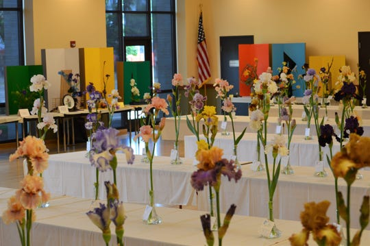 The Oregon Trail Iris Society is hosting an all-variety iris show on May 11 at Center 50+.