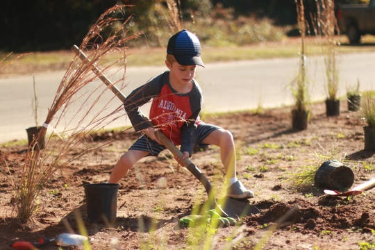 Students plants longleaf pines  in 2018. Maclay School and Tall Timbers will conduct a prescribed fire demonstration at the new longleaf pine ecosystem restoration area Friday.