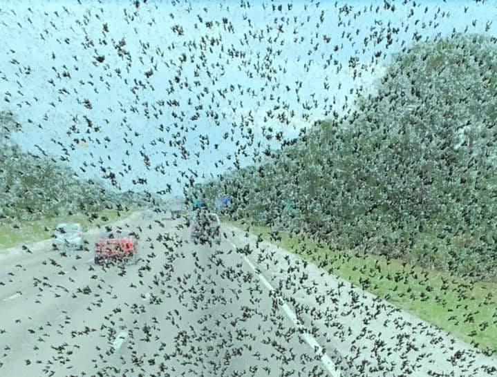 Lovebugs and lovebug season photo via Facebook