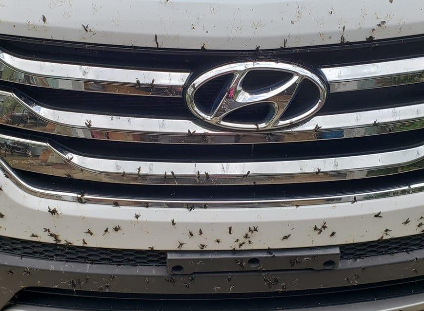 "Lovebugs photo via Facebook: ""So gross!"""