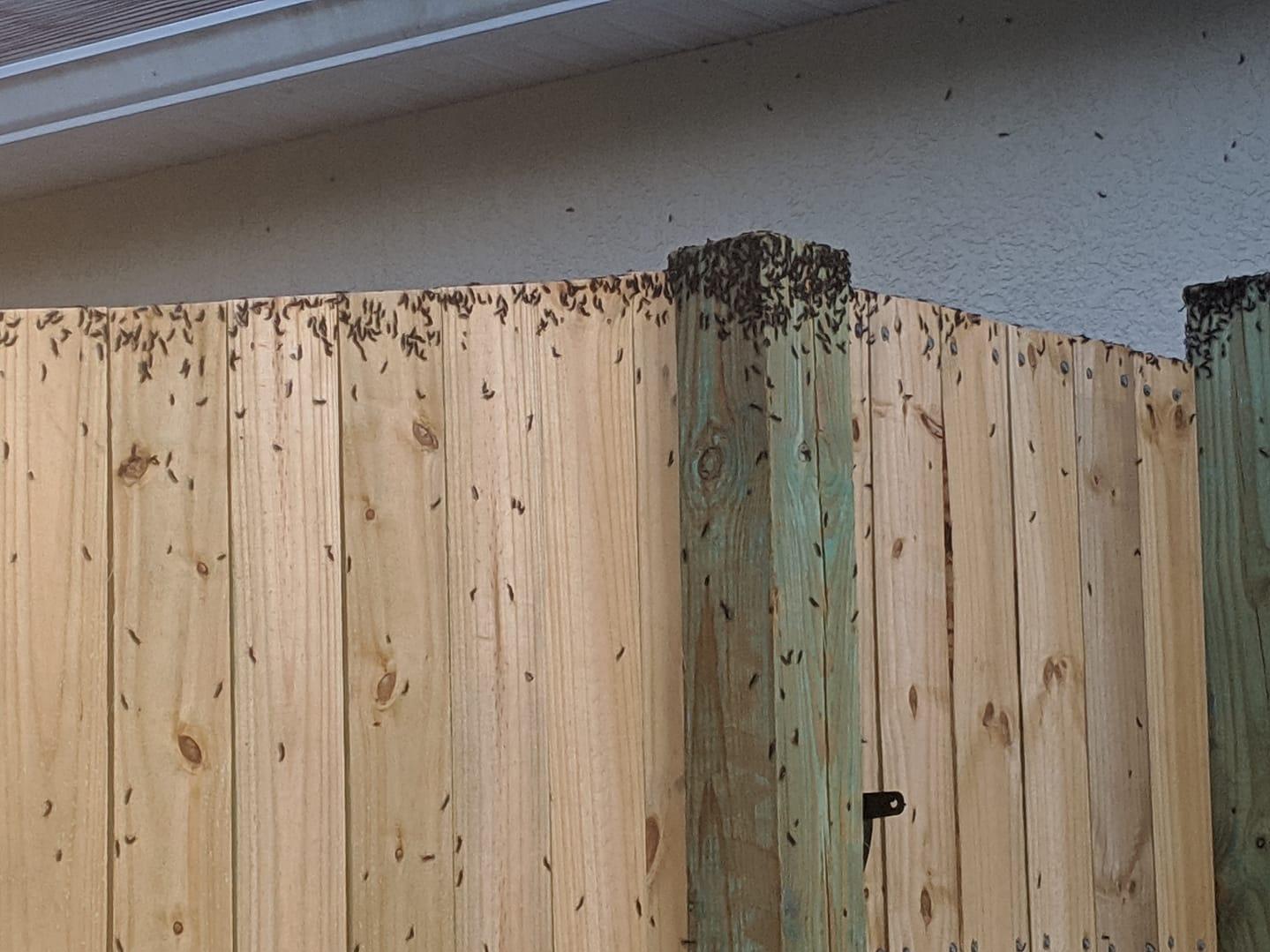 "Lovebugs photo via Facebook: ""My fence"""