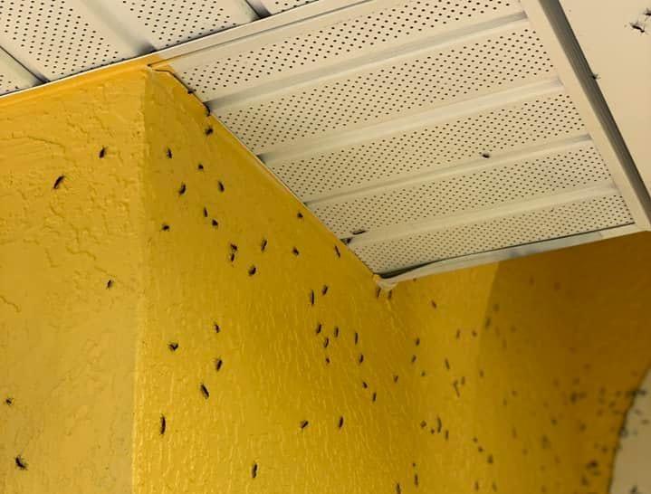 """Lovebugs and lovebug season photo via Facebook: """"Covered walls outside."""""""