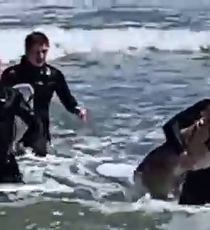 6c408a6af01a Surfers rescue deer from Belmar surf