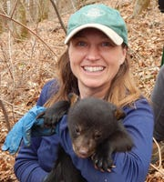 Colleen Olfenbuttel, black bear and furbearer biologist with the N.C. Wildlife Resources Commission, holds a black bear cub found in Asheville city limits during the first phase of the Asheville Urban/Suburban Bear Study.