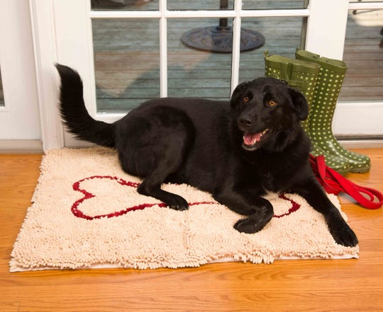 Wet Buddy on a Soggy Doggy doormat.