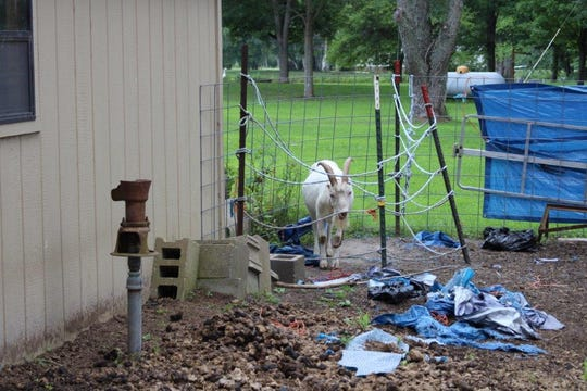 The Humane Society says they won't just rescue cats and dogs, but livestock and horses.