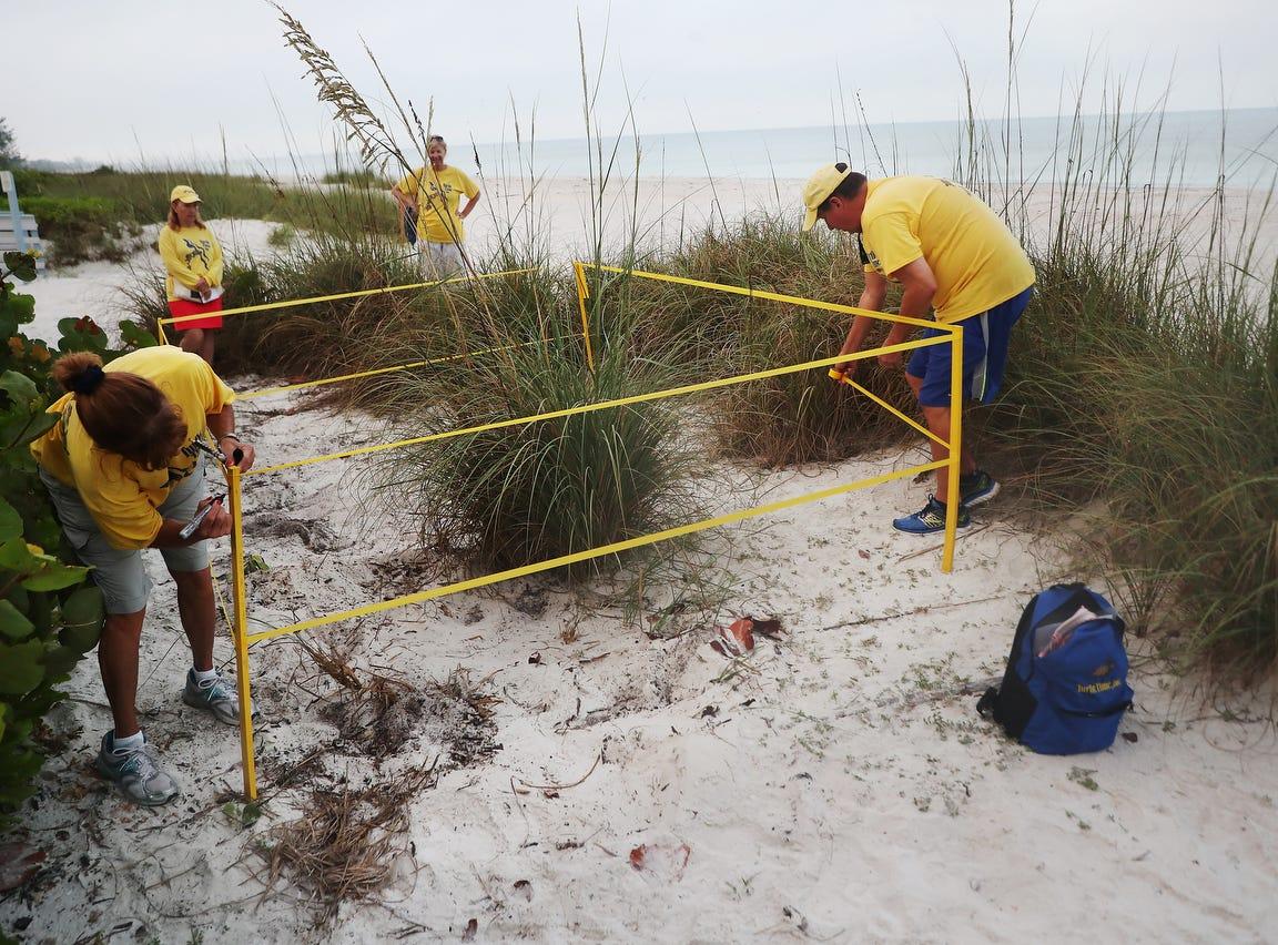 Turtle Time volunteers, Rae Ann Hanly and Bill Heavner document a loggerhead sea turtle nest on Bonita Beach on Wednesday May, 8, 2019. It is the beginning of nesting season for sea turtles.
