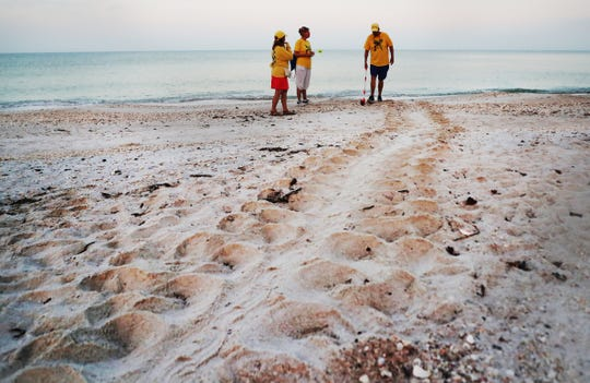 From left, Turtle Time volunteers, Rita Watson, Corrine Williams and Bill Heavner document a loggerhead sea turtle nest on Bonita Beach on Wednesday May, 8, 2019. It is the beginning of nesting season for sea turtles.