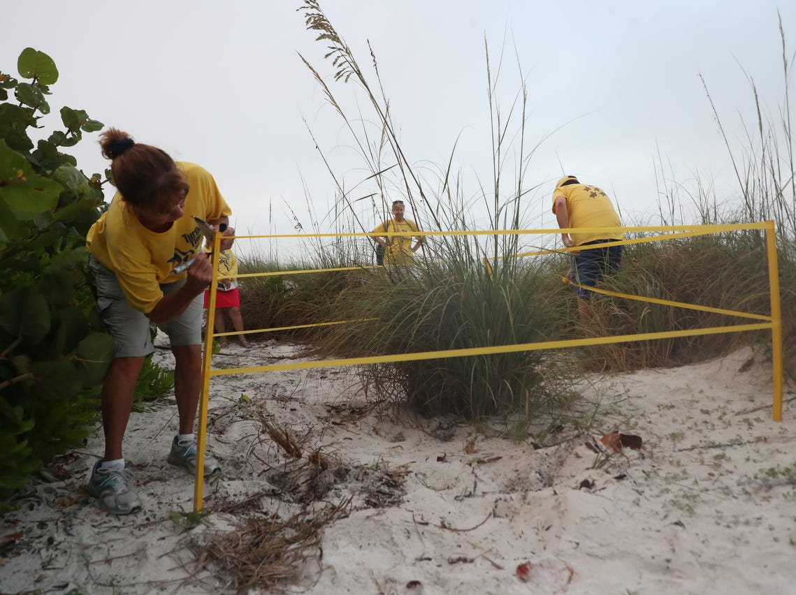 It is the start of sea turtle nesting season in Southwest Florida. Turtle Time Inc. is hoping for a solid nesting season after a particularly nasty red tide killed off hundreds of adults last summer.Ê