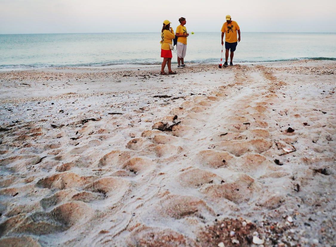From left, Turtle Time volunteers, Rita Watson, Corrine Williams and Bill Heavner document a loggerhead sea turtle nest on Bonita Beach on Wednesday May, 8, 2019. It is the beginning of nesting season for sea turtles.