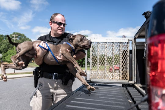 Greenville Animal Control officer Shaun Garrison loads a loose pit bull into the back of his truck during his shift Thursday, May 2, 2019.