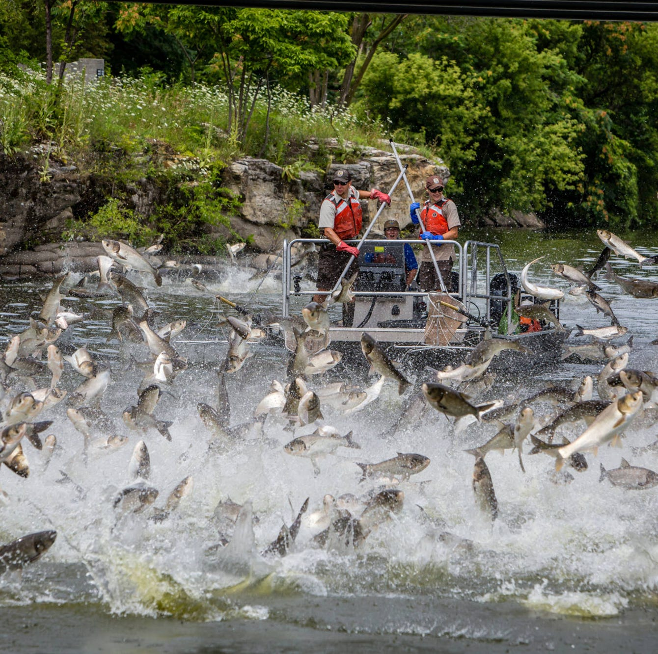Creepy fish. Wild hogs. Obnoxious birds. What has their invasion done to Mississippi?