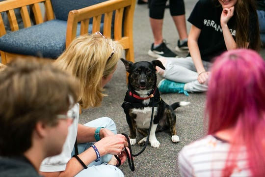 The University of Louisiana at Lafayette helps students to relieve stress during finals week by bringing therapy dogs, like Cooper, to the library as part of Stress Relief Week. The therapy dogs are provided by Pet Partners of Acadiana, a non-profit organization with registered therapy animals, including birds, miniature horses, rabbits and  llamas.