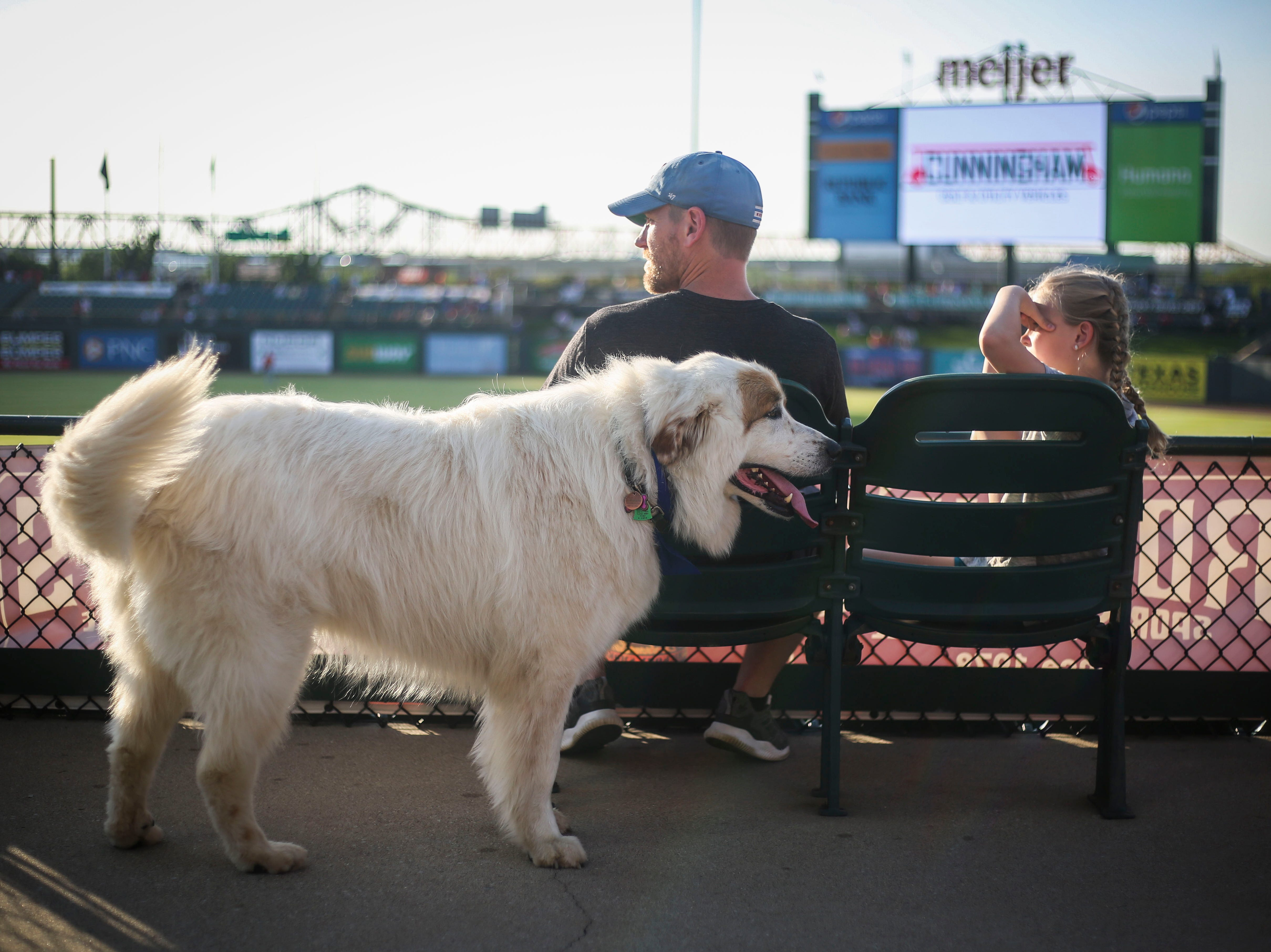 Dottie the great pyrenees wags her tail as Daniel Williams and Hadley Williams watch the Louisville Bats v. Syracuse Mets game during Dog Day Nights at Louisville Slugger Field in downtown Louisville, Ky. on Tuesday, May 7, 2019.