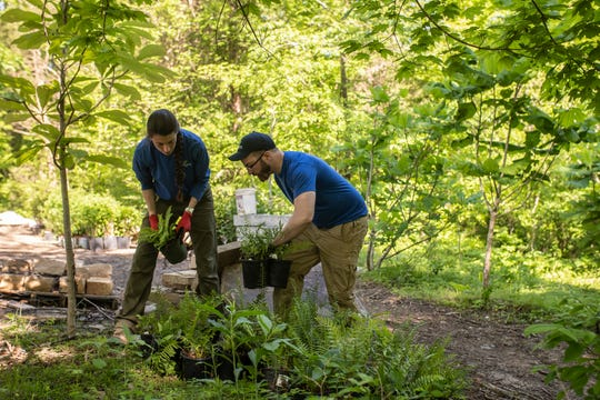 Kayla Franck, left, and Tyler Hampton plant ferns and other vegetation in the new Woodland Garden area in the Parkland of Floyd's Fork Broad Run Park area. May 7, 2019
