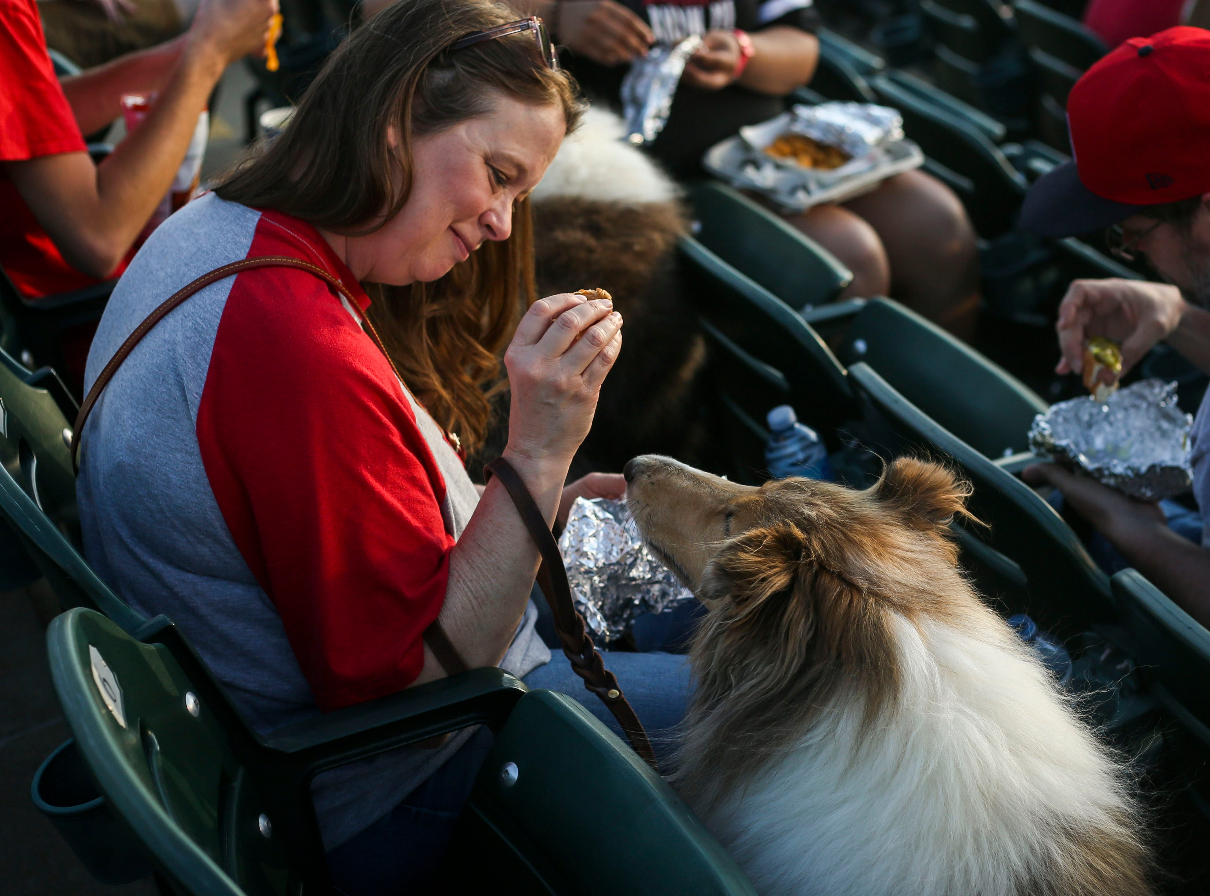 Oli the rough collie is fed part of a hot dog by her owner during the Louisville Bats v. Syracuse Mets game during Dog Day Nights at Louisville Slugger Field in downtown Louisville, Ky. on Tuesday, May 7, 2019.