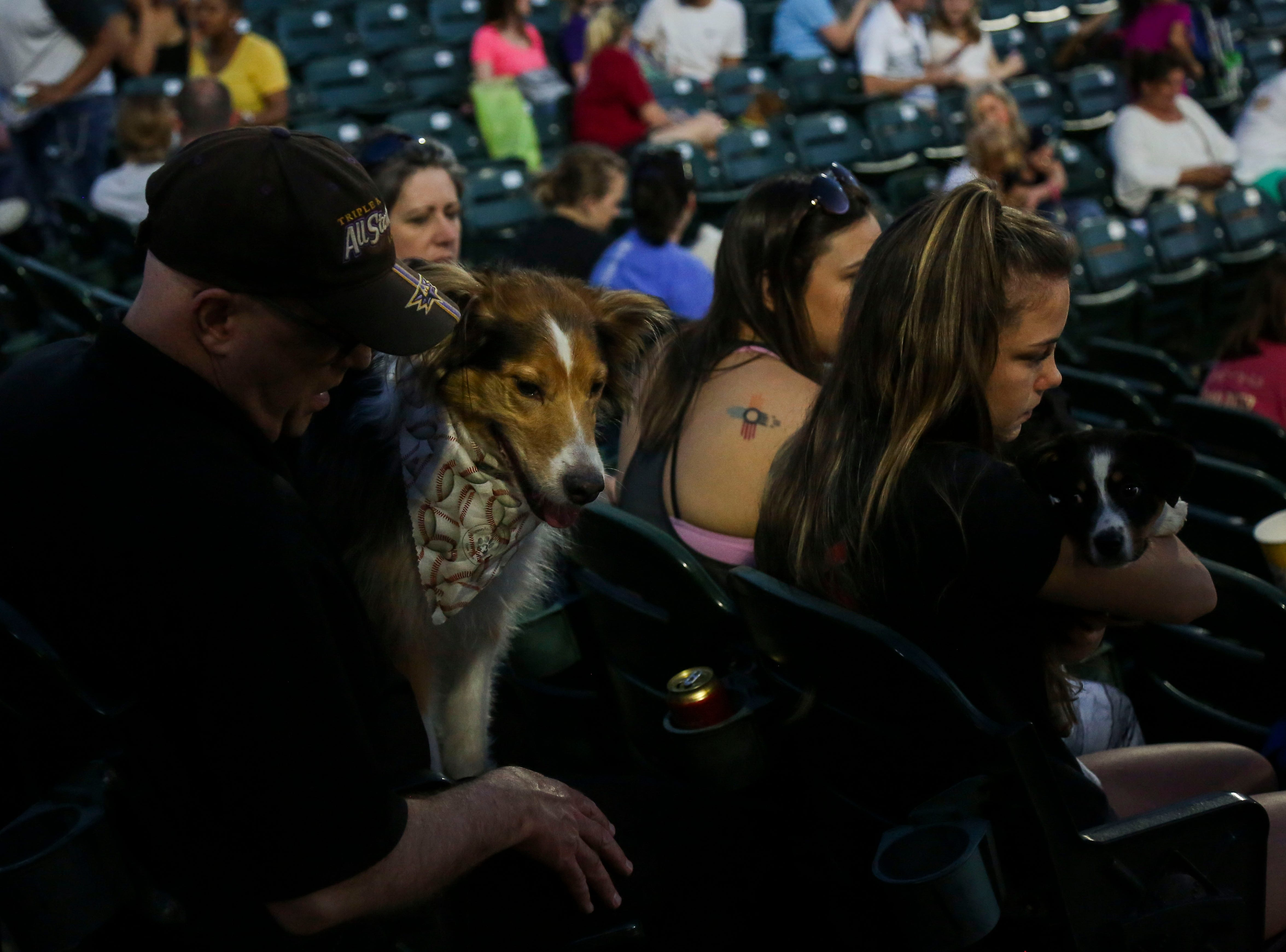 Zelda the Australian Shepard sits with his owner Tony Stevens during the Louisville Bats v. Syracuse Mets game during Dog Day Nights at Louisville Slugger Field in downtown Louisville, Ky. on Tuesday, May 7, 2019.