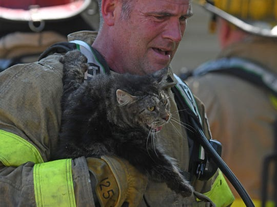 Firefighter Tom Sneeringer brings a cat out of a duplex at 81-83 W. First Street on Wednesday.