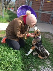 Anna the dog gives kisses to an admirer at the Oshkosh Area Humane Society. The 8-month-old Catahoula leopard dog was found April 30 with a broken right hind leg, which and to be amputated.