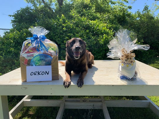 Orkon, the Santa Rosa County Sheriff's Office K-9 injured on duty in April, smiles after receiving a gift basket from the Pensacola Police Department and PPD K-9 agency.
