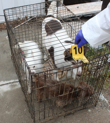 Animal control officers seized 54 animals, including 20 dogs, from a home in Cordes Lakes after being found neglected on May 7, 2019.
