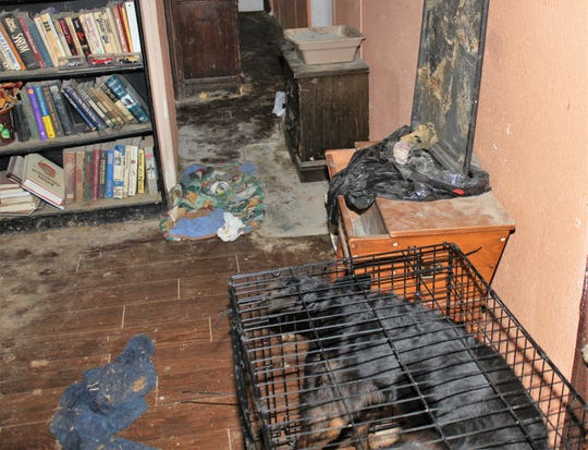 Animal control officers seized 54 animals from a home in Cordes Lakes after witnessing signs of neglect and abuse on May 7, 2019.